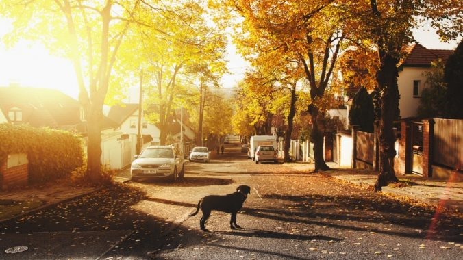 Dog in the road